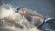 Най- яката лотка - делфин
