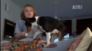 Кучета 101- Басенджи