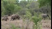 Африканските Животни - Discovery Channel [ Hd Качество ]