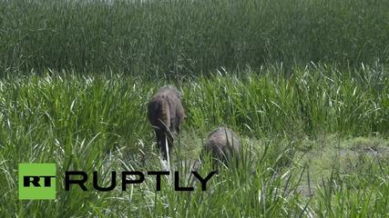 В Сърбия продават магарешко сирене за хиляда евро килограма