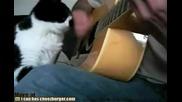 Много Смях - Котка влюбена в китара