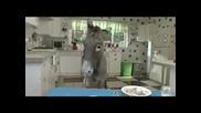Mtv Switch - Кухнята