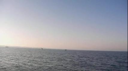 На риба с Гошо Рибов