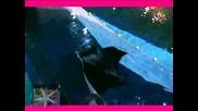 ! Манта, най - голямата риба скат в дом