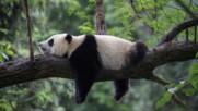 Любопитни факти за животните по света