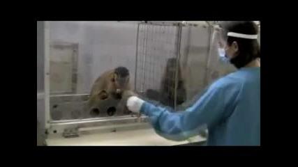 Експеримент с маймунската ревност