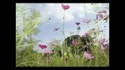 Щурците - Празник На Цветята