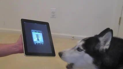 Кучето Мишка пее по добре от Justin Bieber