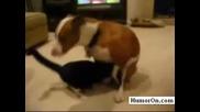 Куче Изнасилва Котка