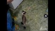 Такава котка не сте виждали