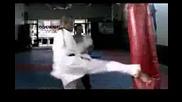 Mixed Martial Arts Movieandre Lima