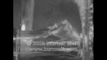 Куршуми заснети с 1 мил. кадъра/сек. от Kurzzeit