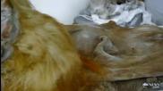 : Откриха напълно запазен мамут