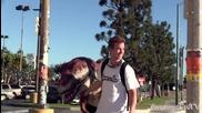 Динозавър плаши хората в квартала