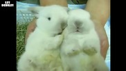 Сладки зайчета се търкат едно в друго