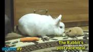 Неудобни моменти от животинското царство