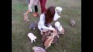 Заешки рай - Островът на зайците