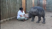 Бебе носорог