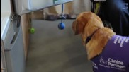Куче помага постоянно в ежедневните задължения на жена инвалид