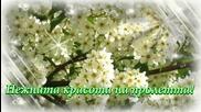 Нежната красота на пролетта! ... (music Paul Mauriat) ... ...