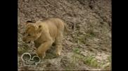 Африканските котки - Disney Nature ep2 /07.07.2013