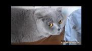 Гузна котка