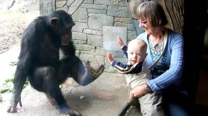 Шимпанзе срещу бебе