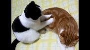 Котка прави масаж на друга котка ...