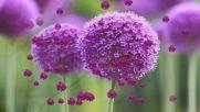 Сбогуване с цветното лято! ... ( Richard Clayderman music) ... ...
