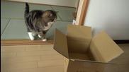 Котето Мару и Кашоните ..
