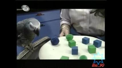 Рекордите на Гинес:Най-умният папагал (Алекс) *HQ*