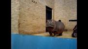 хипопотами хапват ябълчици :)