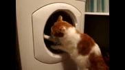 Котка против автоматична пералня