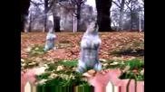 Катерици танцуват на песен на Майкъл Джексън