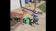 Малко момченце среща сърна за пръв път