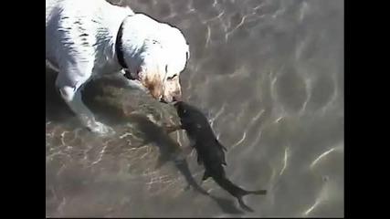 Куче и риба плуват заедно ..