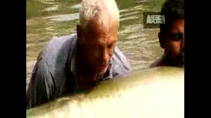 риба с човешки размери