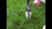 Атака На Котка