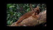 Най - Опасните Животни В Света: Гори ( Бг Аудио )