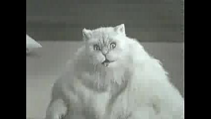 Дебела Котка Прави Айробика
