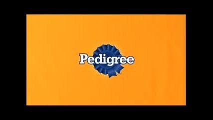 Pedigree Commercial - Разтрийте корема ми