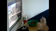 Коте гледа как момче играе Cs