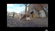 Катерица краде Gopro камера и я отнася на дървото.