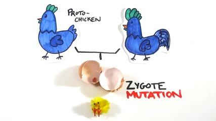 Яйцето или кокошката ?! Вижте отговора
