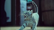 Котенца The Beat
