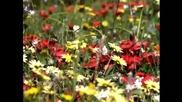 Ginkgo Garden - One and Twain