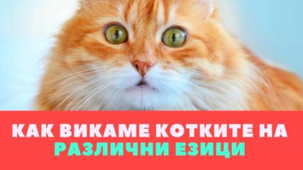 Как викаме котките на различни езици