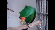 Папагали се хранят с лъжица