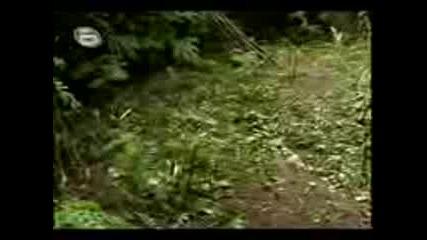 800кг. сух канабис откриха в Петрич