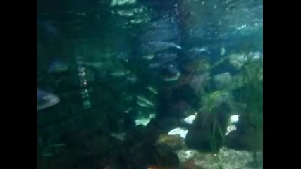 Риби от Средиземно море